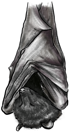 overhanging_bat